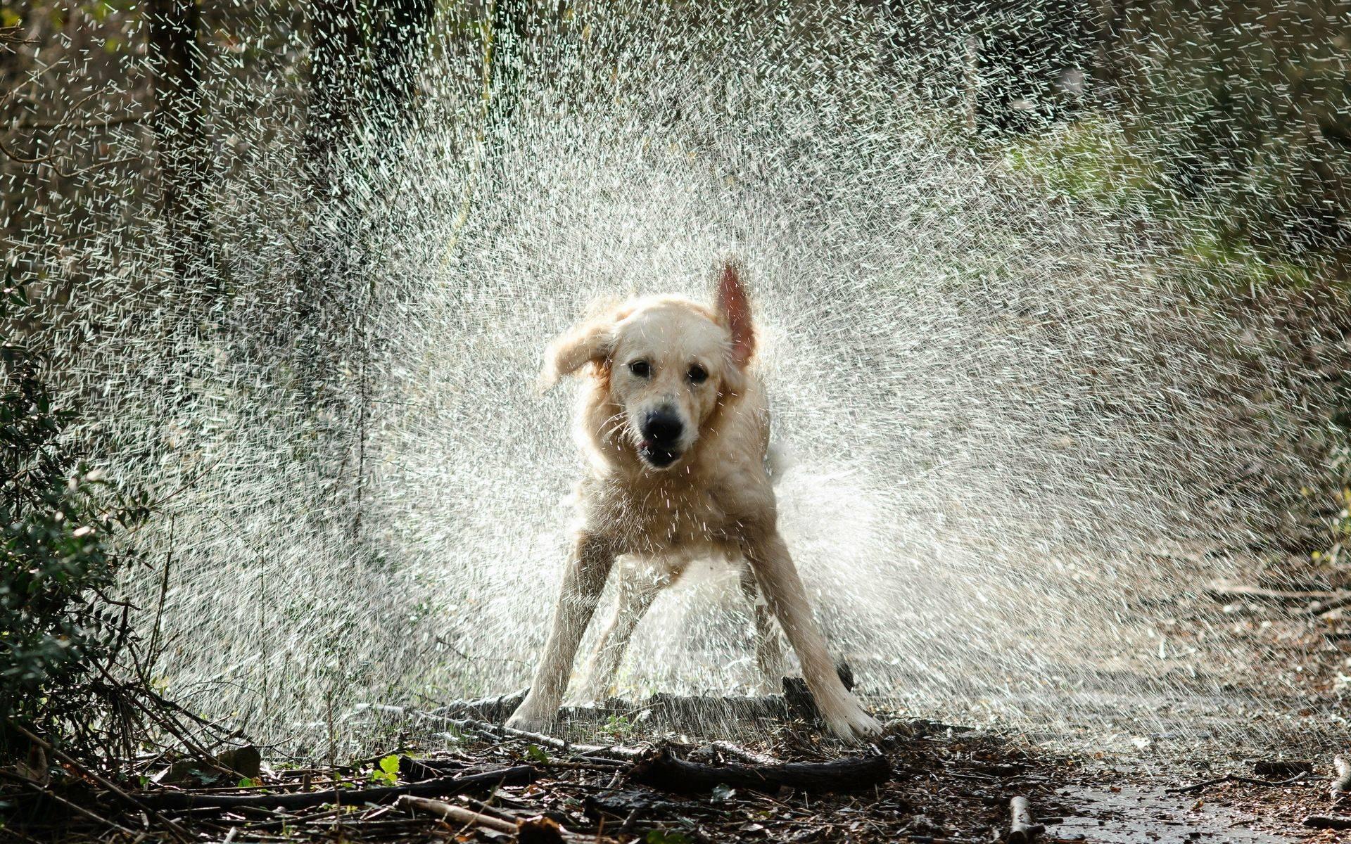 dog-in-rain