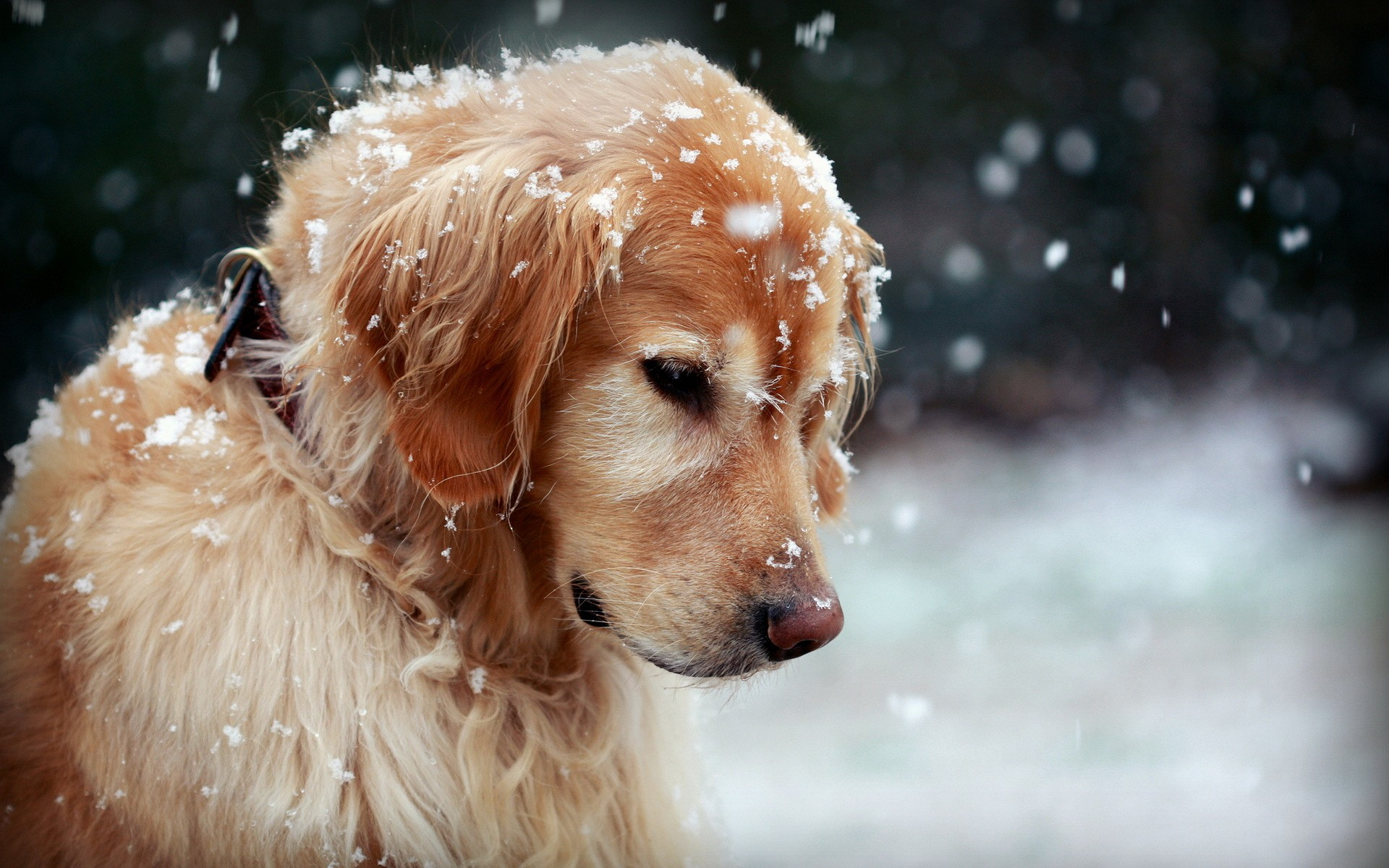 57091_dog_dog_in_the_snow